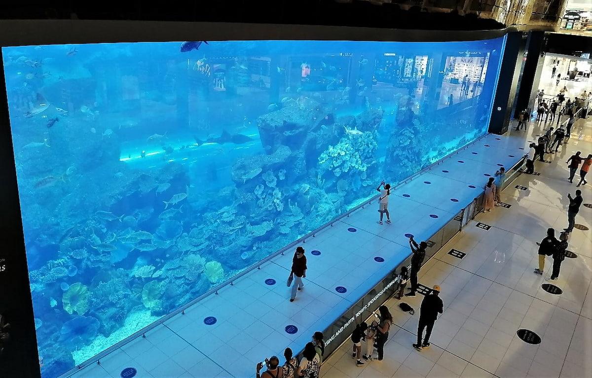 Le shopping à Dubaï permet de faire de belles découvertes comme cet immense aquarium