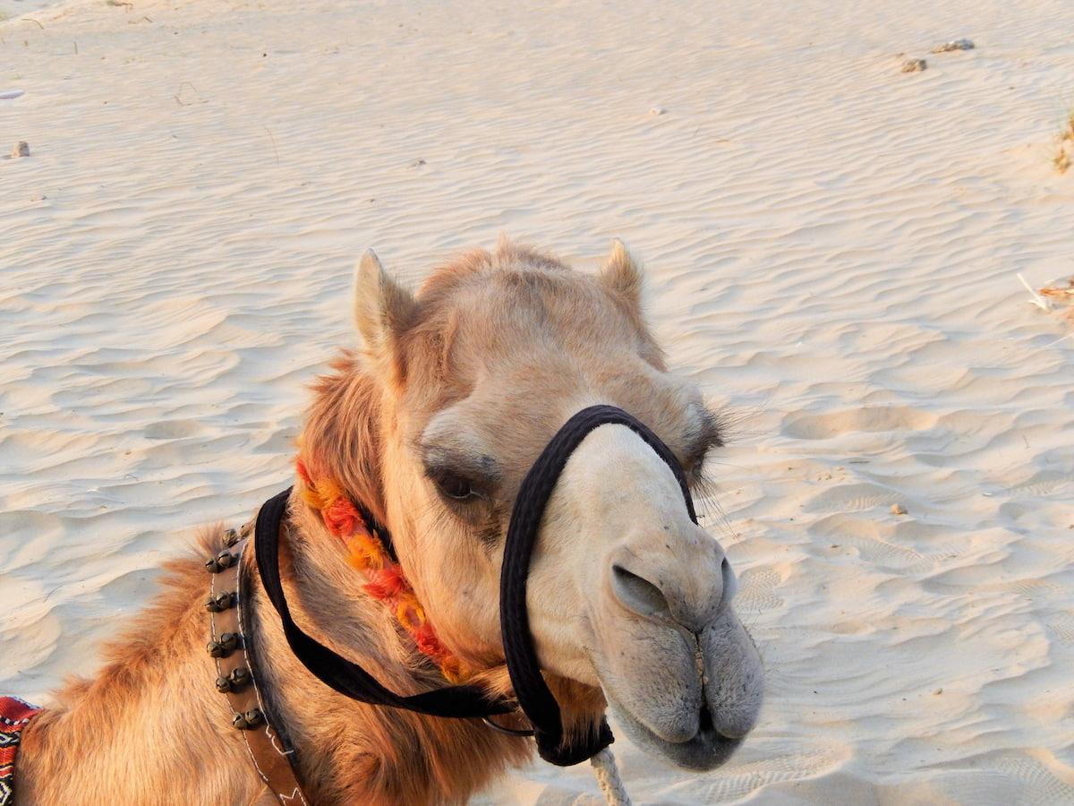 Aller dans le désert près de Dubaï