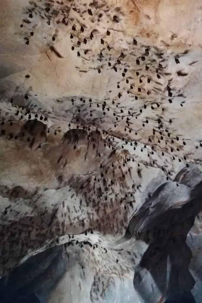 Des chauves-souris volent au dessus de nos têtes.