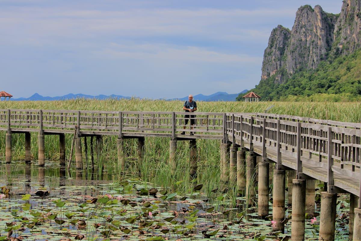 les lotus du parc national Khao Sam Roi Yot.