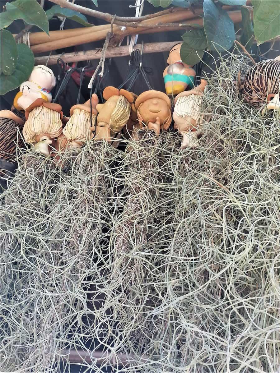 Magnifiques supports en terre cuite pour les plantes