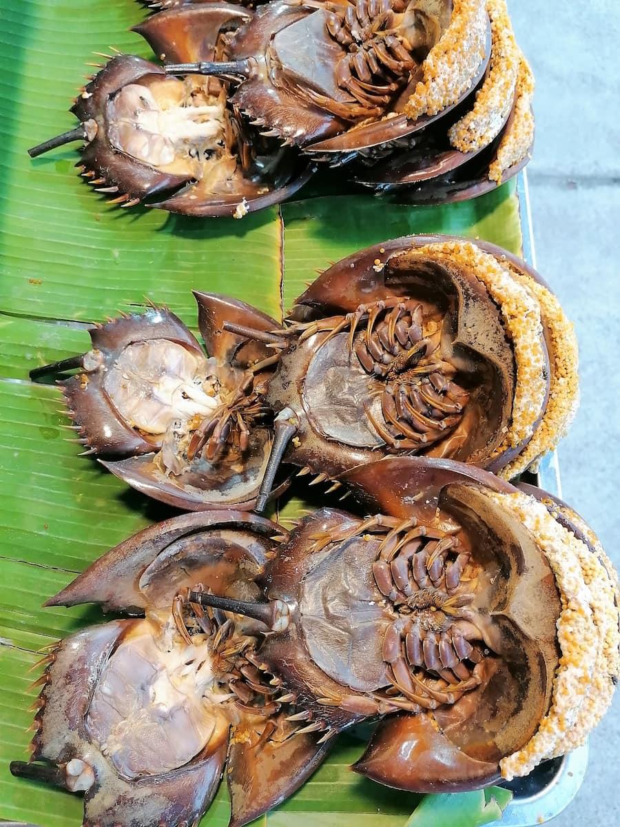 La limule est une espèce d'animal préhistorique dont on ne mange que les œufs.